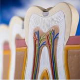 PERIO 歯周治療・歯周形成外科